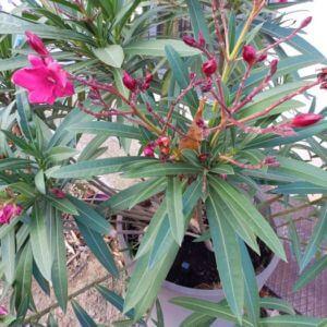 Phytomag plantes